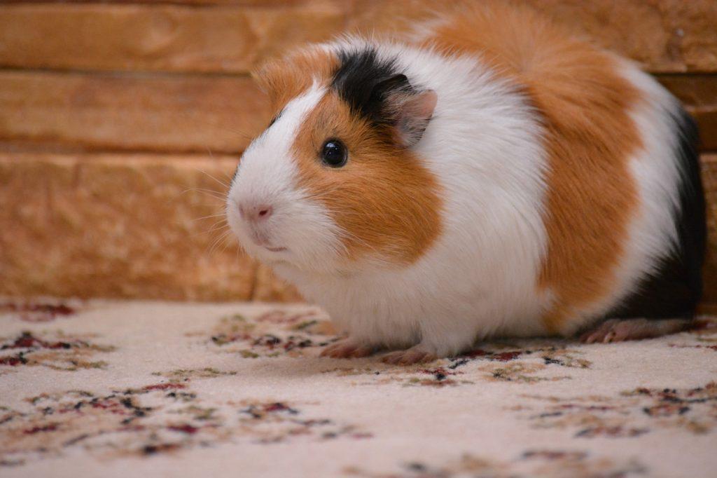 piggy-2146099_1280